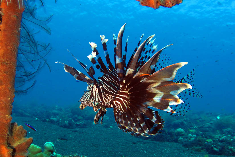 A relaxing Bali dive package in Bali